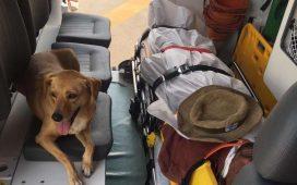 Cadela entra em ambulância e acompanha tutor até o hospital