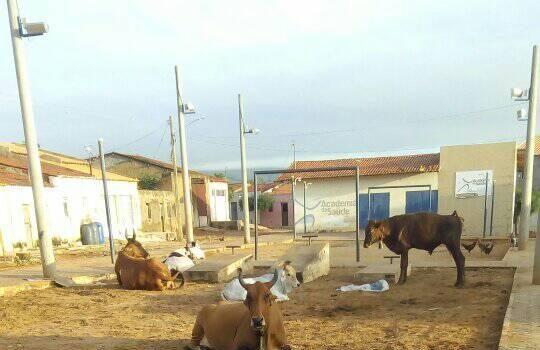 Academia da Sapude do Socorro vira curral de vacas