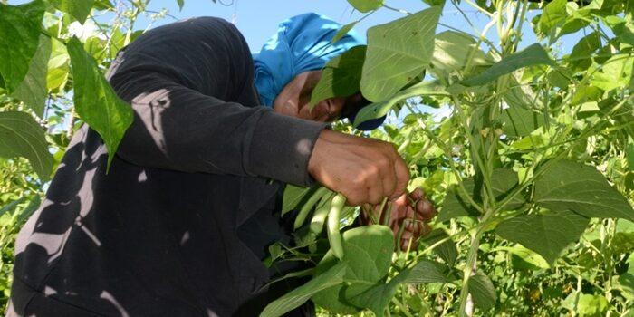 Veja os nove municípios pernambucanos onde os agricultores terão direito ao Garantia-Safra