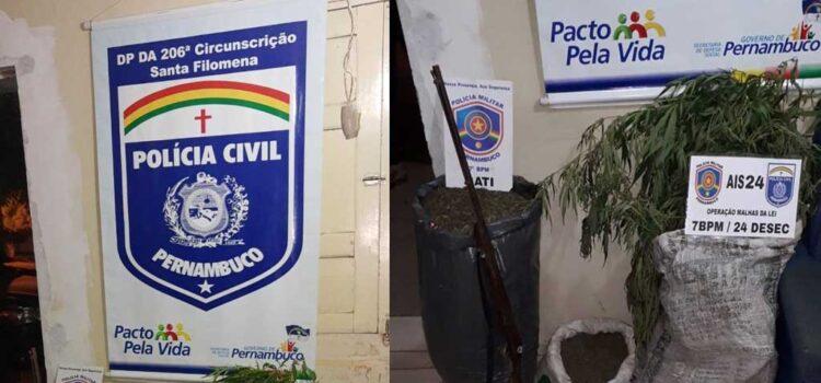Santa Filomena: Dois indivíduos presos e menor apreendido por plantação e tráfico de maconha e porte ilegal de arma