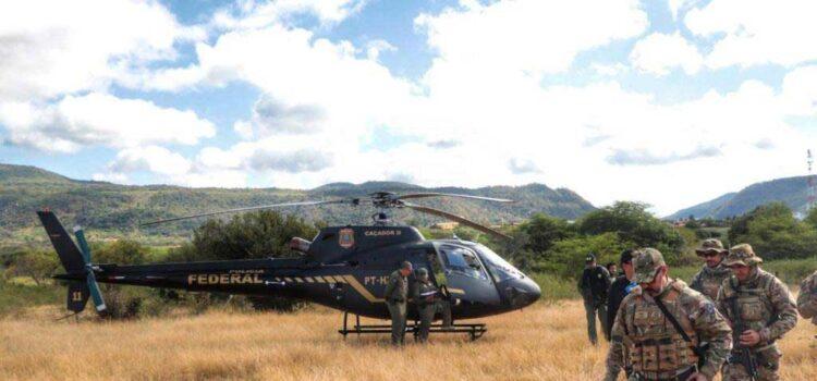 PF destrói mais de 538 mil pés de maconha no sertão de Pernambuco