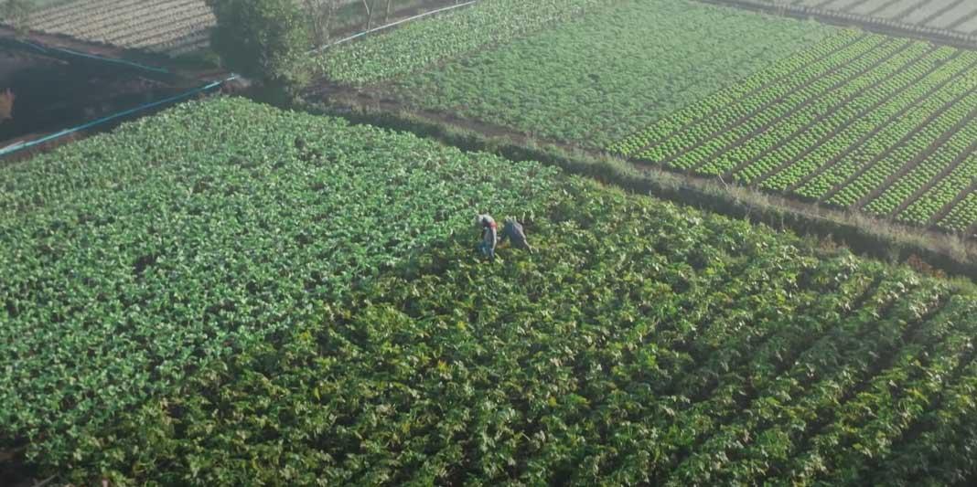 Agricultura é onde começa a vida