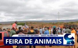 População do Socorro precisa da feira de animais, mas o Prefeito não assume seu dever