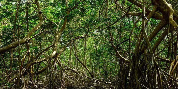 Dia de Combate à Poluição: Poluição e avanço urbano ameaçam manguezais no Brasil