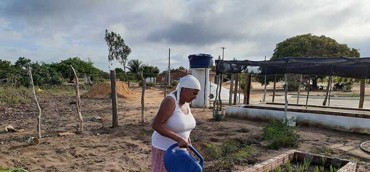 Agricultura familiar recebe apoio e incentiva a geração de emprego e renda de 131 famílias nas regiões do Araripe (PE) e Serra do Inácio (PI)