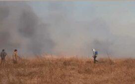 Vídeo registra momentos de pânico e desespero causados por grande incêndio na zona rural de Dormentes