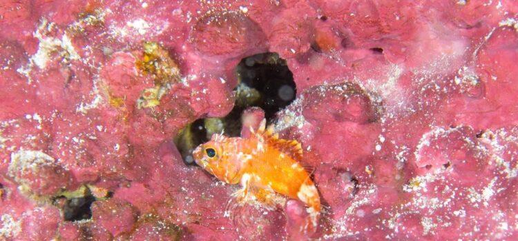 Expedição científica descobre quatro novas espécies de peixe em Fernando de Noronha
