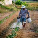 Garantia-Safra deve beneficiar mais de 197 mil agricultores familiares na safra 2019/2020