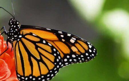 O nível de insetos ao redor do mundo está diminuindo.…