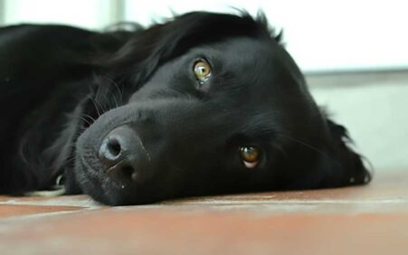 Morte de cães por envenenamento; de quem é a culpa?