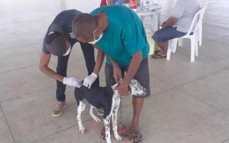 Cães e gatos do distrito do Socorro são vacinados contra…