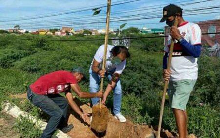 Prefeito Ricardo Ramos faz plantio de árvores na cidade de…