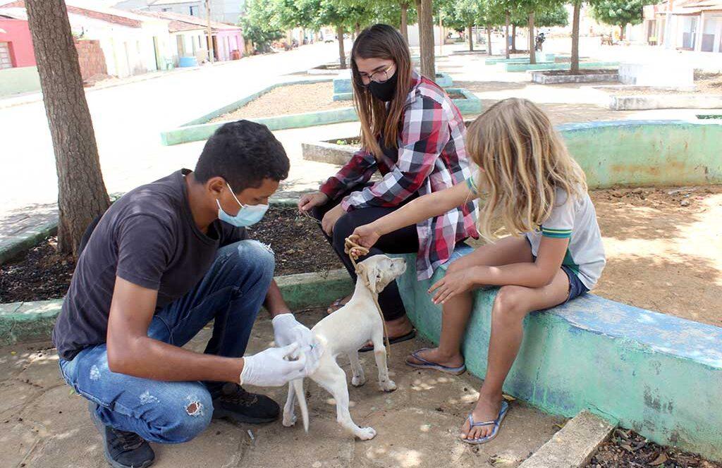 Prefeitura de Santa Filomena realiza vacinação antirrábica em cães e gatos no distrito de Campo Santo