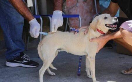 Rússia vacina cães, gatos e visons contra covid-19