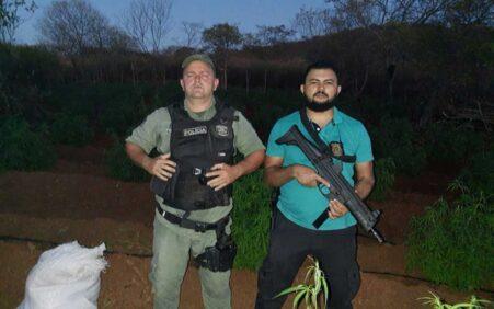 Polícias Civil e Militar prendem acusado e erradicam 12 mil…