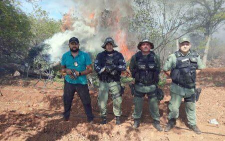 Em Santa Filomena Policia erradica duas roças de maconha em…